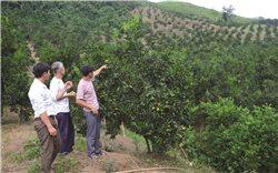 Tuyên Quang: Sản phẩm nông nghiệp khẳng định thương hiệu