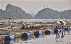 Hoà Bình: Phát huy hiệu quả tiềm năng mặt nước
