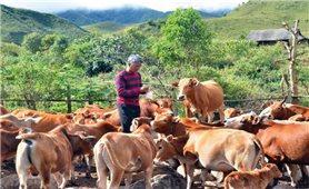 Xã Sín Thầu, huyện Mường Nhé: Nỗ lực về đích nông thôn mới