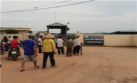 Phú Thọ: Người dân khốn khổ vì trại gà gây ô nhiễm