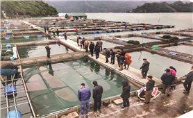Hòa Bình: Xây dựng thương hiệu cá sông Đà theo chuỗi giá trị