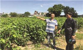 Lâm Hà (Lâm Đồng): Tình trạng vi phạm san lấp đất ruộng vẫn tiếp diễn