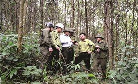 Bảo vệ rừng bằng công nghệ 4.0