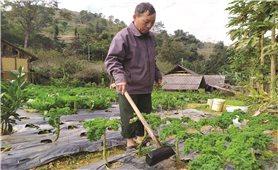 Làm giàu từ sản xuất rau an toàn