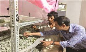 Đồng bào Cơ-ho ở Lâm Đồng: Đổi đời nhờ trồng dâu nuôi tằm