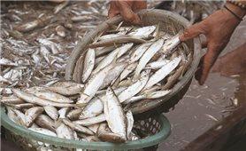 Cá tép dầu khô sông Đà