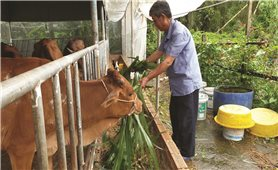 Tỷ phú nông dân Dương Văn Tạo
