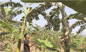 Thừa Thiên-Huế: Nỗ lực giảm nghèo, phát triển bền vững vùng DTTS