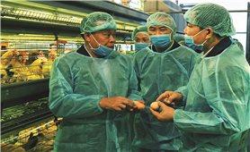 Tập trung triển khai đồng bộ các giải pháp phòng, chống dịch cúm gia cầm