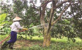 Yên Bái: Xây dựng thương hiệu, khẳng định vị thế nông sản