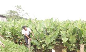TP. Hà Nội: Hướng tới xây dựng chuẩn nông thôn mới nâng cao