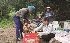 Để cam Hà Giang không là nông sản giải cứu
