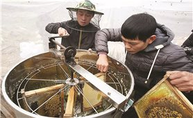 Sản phẩm OCOP của đồng bào DTTS: Góp phần khẳng định vị thế nông sản Việt