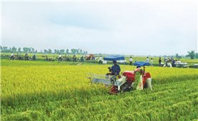 Phát triển Nông nghiệp 4.0: Nhìn từ Quảng Ngãi