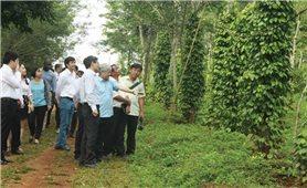 Ứng dụng công nghệ cao trong sản xuất nông nghiệp ở Đăk Nông: Bảo đảm tính khả thi từ khâu quy hoạch