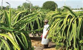 Đồng bào Chăm Tân Thuận hỗ trợ nhau thoát nghèo