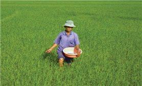 Nông dân lo lắng vì giá phân bón tăng đột biến