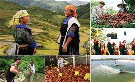 Thấy gì từ Báo cáo của WB về giảm nghèo ở Việt Nam Bài 1: Thành quả giảm nghèo bền vững