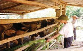 Phát triển chăn nuôi theo hướng hàng hóa