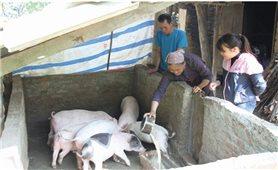 Thoát nghèo từ mô hình chăn nuôi lợn thịt