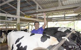Hiệu quả từ mô hình chăn nuôi tiên tiến ở huyện Mỹ Tú
