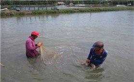 Đổi thay ở vùng bãi ngang, ven biển U Minh