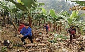 Lào Cai: Tăng cường giải quyết việc làm cho thanh niên dân tộc thiểu số