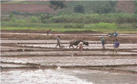 Hỗ trợ sản xuất từ Chương trình 135 ở Điện Biên: Góp phần giảm tỷ lệ hộ nghèo vùng dân tộc thiểu số