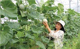 Thành công từ mô hình sản xuất nông nghiệp công nghệ cao