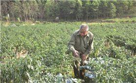 Hỗ trợ sản xuất theo Chương trình 135 ở Hòa Bình: Góp phần thúc đẩy kinh tế-xã hội phát triển