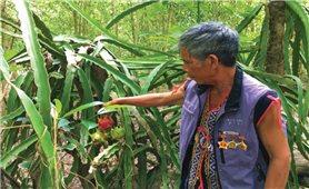Già làng A Nguyh, tấm gương sáng của thôn Kép Ram