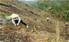 Hỗ trợ gạo theo Nghị định 75/2015/NĐ-CP: Vì sao chậm triển khai?