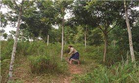 Chuộc lỗi với rừng