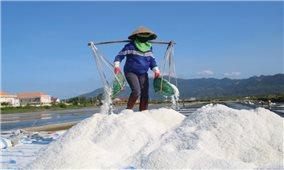 Muối ế trắng đồng ở Bình Định