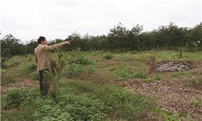 Quảng Trị: Giao đất rừng đã có chủ cho dân