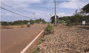 Đăk Nông: Cần sớm xử lý tình trạng dọn cỏ bằng thuốc trừ sâu