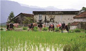 Bình Liêu (Quảng Ninh): Nỗ lực xóa bỏ các tập quán lạc hậu của người dân