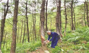 Trồng rừng gắn với bảo vệ môi trường