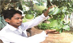 Xây dựng thương hiệu nông sản an toàn: Tạo lợi thế cạnh tranh cho sản phẩm