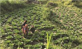Phân định vùng DTTS và miền núi phù hợp giai đoạn mới: Nhìn từ tỉnh Hà Giang