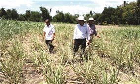 Nông nghiệp Phú Yên: Hiệu quả từ ứng dụng KH&CN