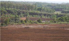 Dự án khu du lịch sinh thái ở Vĩnh Linh: Vội vã phá rừng để thi công vì sợ bị thu hồi?