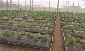 Vĩnh Phúc: Áp dụng công nghệ cao để thúc đẩy phát triển nông nghiệp