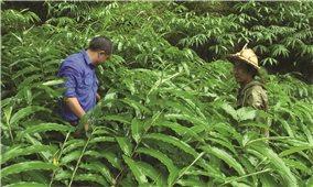 Quỹ Quốc gia về việc làm tại Lào Cai: Nguồn lực quan trọng tạo việc làm cho thanh niên DTTS