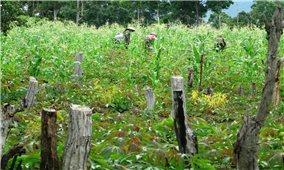 Xử lý hành vi vi phạm về quản lý sử dụng đất đai: Còn nhiều bất cập