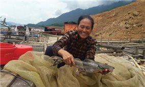 Nghề nuôi cá trong lòng hồ Hòa Bình