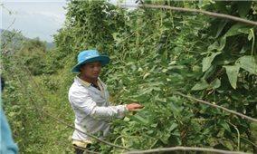 Khởi nghiệp từ làm nông nghiệp sạch: Xu hướng mới ở Đăk Lăk