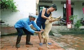 Phú Thọ: Người dân lo lắng vì xuất hiện hàng loạt ổ dịch chó dại