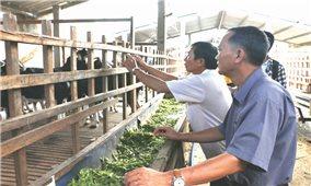 Tìm giải pháp xử lý phụ phẩm nông nghiệp