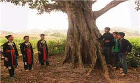 Bảo tồn dân ca Cao Lan, Sán Chí